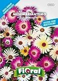 Sementi da fiore di qualità in bustina per uso amatoriale (MESEMBRIANTEMO IN MISCUGLIO)