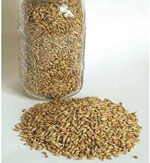 David's Garden Seeds Grain Crop Barley Robust 2720 (Brown) Non-GMO, Organic One Ounce Package