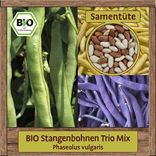 Samenliebe BIO Bohnen Samen Samenmischung Trio Mix (Phaseolus vulgaris) Bohnensamen Sorte Neckarkönigin Neckargold Blauhilde für 15 Pflanzen