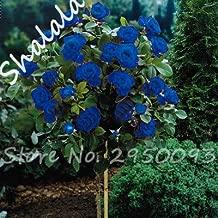 8 : On Sale Outdoor Plant 200 Pcs Flower Rose Tree Hybrid Tea Roses Seeds,Bonsai Plant Rose Flower Seeds Goods for Horticulture