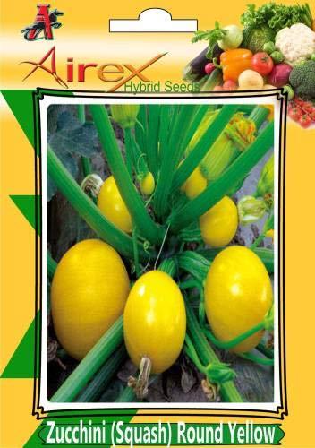 FERRY Hohe Wachstum Seeds Nicht NUR Pflanzen: Seed Zucchini (Squash) Runde Gelb (Hybrid) Seed (Packung mit 10 Samen pro Paket) Seed (10 pro Paket)