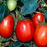Las semillas de tomate. Río Grande, no GMO tomate de la herencia de la semilla, muy tolerante al calor, 50ct