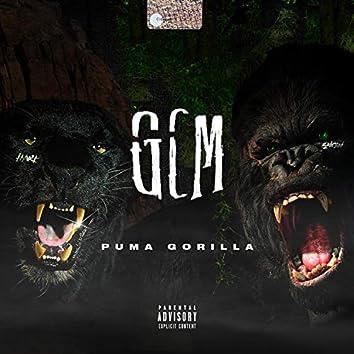 Puma Gorilla