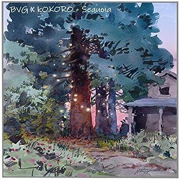 Sequoia (feat. Kokoro)