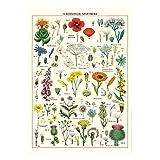 Cavallini Dekoratives Geschenkpapier (Wildblumen)