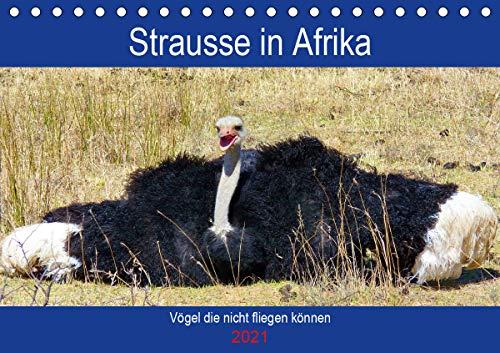 Strausse in Afrika (Tischkalender 2021 DIN A5 quer)