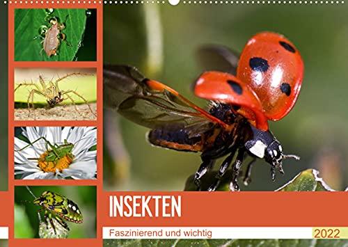 Insekten. Faszinierend und wichtig (Wandkalender...