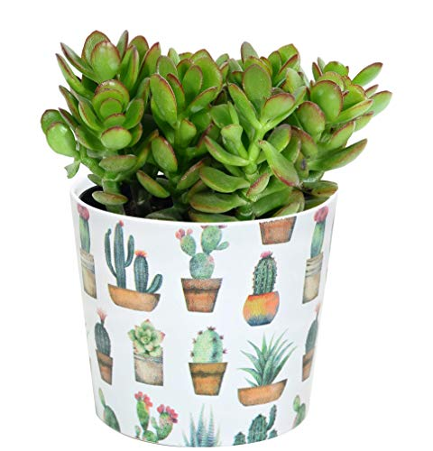 Costa Farms Crassula ovuta Live Succulent Indoor, Cactus Decor Ceramic, Jade Plant