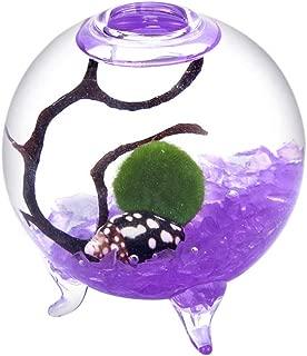 EssenceLiving Pet Marimo Kit- 2.4 Inch Small Glass Orb with 3 Feet, Nano Moss Ball, Sea Fan, Sharp Glass Gravel, Shells