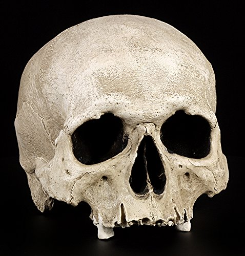 Totenkopf Replikat lebensecht - Menschen Schädel Figur