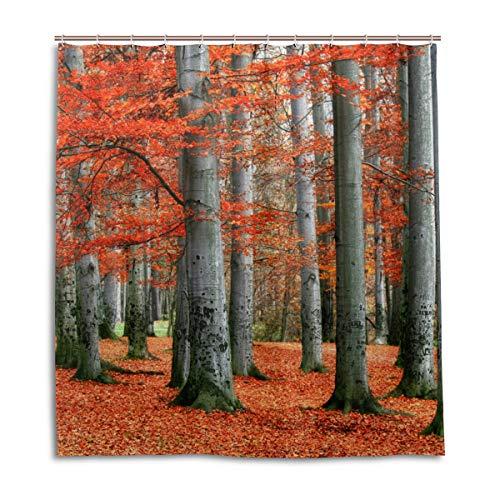 CPYang Duschvorhänge Herbst-Ahornwald Baum Wasserdicht Schimmelresistent Badevorhang Badezimmer Home Decor 168 x 182 cm mit 12 Haken