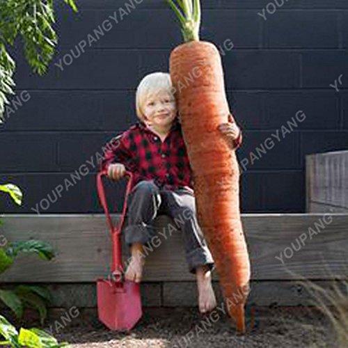 100/pcs super Grosses graines de carotte Bonsai géant carotte Semences potagères et les graines de fruits Graines bio Hygiène pour jardin Noir