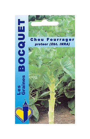 Les Graines Bocquet - Graines De Chou Fourrager Protéor (Branchu) - Graines Potagères À Semer - Sachet De 10Grammes