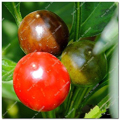 Cerise poivre Graines de légumes jardin Bonsai Chili usine Décoration non-Ogm Jardin Cuisine Assaisonnement Alimentation 200 4 Pcs