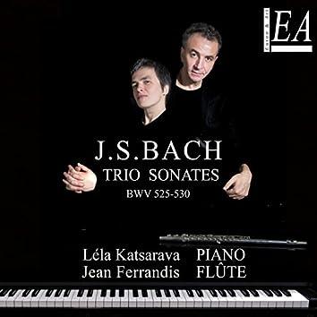 Bach: Organ sonatas, BWV 525 - 530 (Arr. for Piano and Flute)