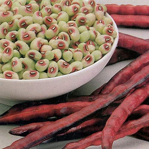 Samen-Paket Nicht Pflanzen: 50 - Seeds: Knuckle Purplehull Cowpea - EIN brauner Zucker Crowder Art !! Große Erträge Schiff frei