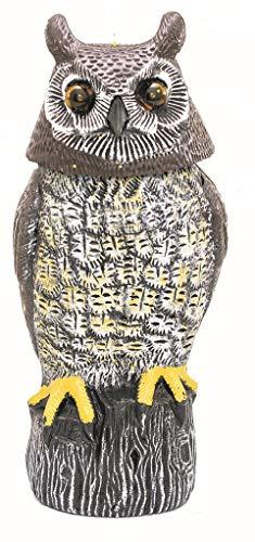 Solar Owl Guardians (Grey)