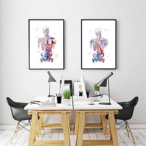 DMPro Leinwand Kunst Gedrucktes Bild Menschliche Muskeln Nordisches Poster Skelett Anatomie Aquarell Malerei Körper Medizinische Wanddekoration 40x60cmx2 Kein Rahmen
