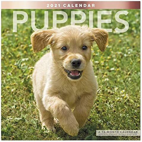 Mead 2021 Puppies Wall Calendar 12 x 12 Monthly LME1001021 product image