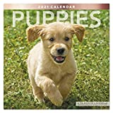 Mead 2021 Puppies Wall Calendar, 12' x 12', Monthly (LME1001021)