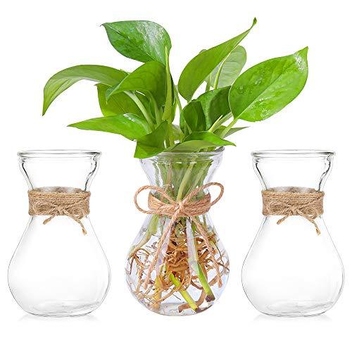 Klarglasvasen Für Blumen Mit Schnurseil, 3-Teilige Glühbirnenhyazinthenvasen Bud Avocado Vase Edelwickenvase Für Hydroponikpflanzen Narzissen Orchideen Für Desktop-Tisch Innenfensterbank Dekor