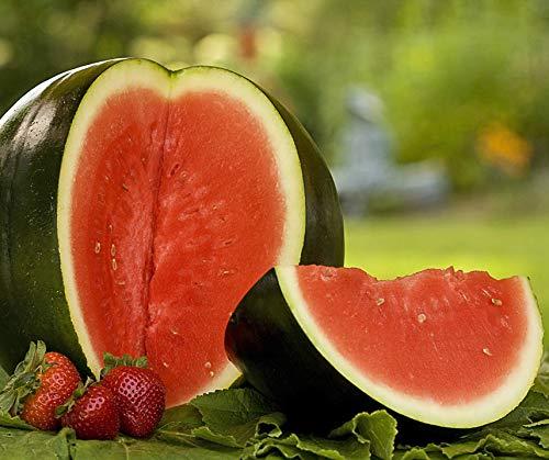 Bobby-Seeds Melonensamen Sugar Baby - Wassermelone Portion