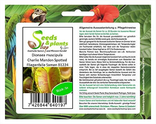 Stk - 5x Dionaea muscipula Charlie Mandon Spotted Fliegenfalle Samen B1224 - Seeds Plants Shop Samenbank Pfullingen Patrik Ipsa