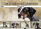 Der Louisiana Catahoula Leopard Dog (Wandkalender 2020 DIN A3 quer): Hunderasse aus den USA (Monatskalender, 14 Seiten )