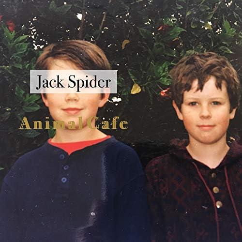 Jack Spider