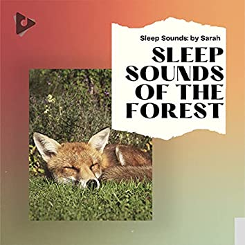 Sleep Sounds of The Forest