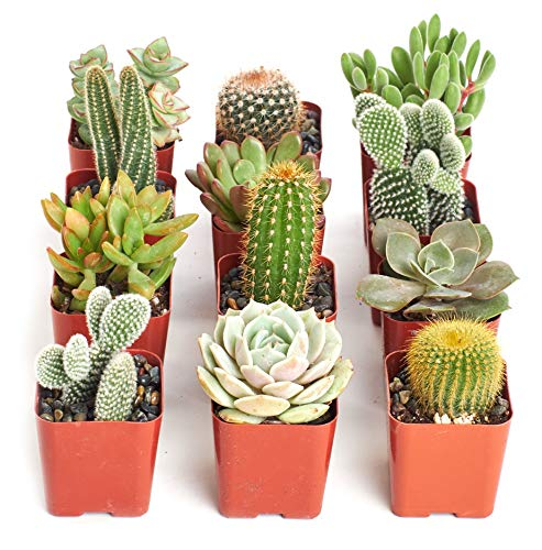Shop Succulents   Cactus & Succulent Live Plants, Hand Selected Variety Pack of Cacti and Mini Succulents   Collection of 12