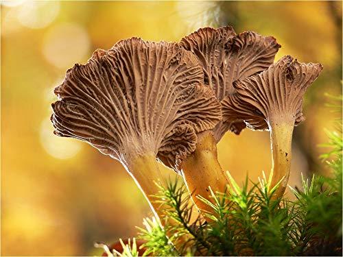 Mycélium de Girolle Grise - Kit de Culture de Champignons Mycélium liquide en tube de 15ml ou 50ml (Tube, 15 ml)