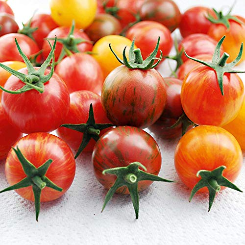 Suttons Tomato Seeds - Artisan Bumble Bee Mix, Tomato Seeds, Lycopersicon esculentum, 10 Seeds per Pack, Grown Your own, Ideal for containers, beds and Boarders and Greenhouse