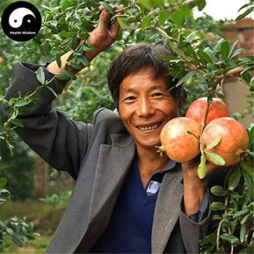 PLAT FIRM Germination Les graines: 60pcs: Acheter grenade arbres fruitiers Graines Plante Punica granatum Pour Berry Fruit