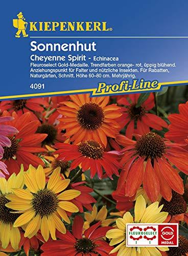 Echinaceae purpurea Sonnenhut Cheyenne Spirit