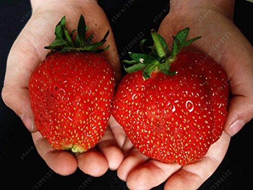 300pcs / sac graines de fraises fraises géant graines de fruits bio légumes pot bonsaï non-OGM pour des graines de plantes de jardin à domicile