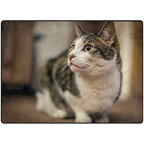 Ogden Moll Teppiche Teppich Haustier Kätzchen Katze Säugetier Buddy Chum Moderner Weicher Teppich Für Wohnzimmer, Schlafzimmer, Eingang, Dekorativ, Flur,60x91 cm(36x24 Zoll)
