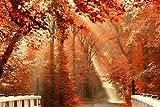 Bdgjln Puzzle 1000 Piezas-Hermosa Naturaleza otoño Parque Carretera Puente Hojas-Puzzle Adultos, para Educativo El Alivio del Estrés Circular Desafío Intelectual Juegos Niños Adultos-50x75cm