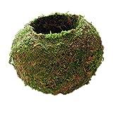 F Fityle Maceta Natural De Estilo Japonés Musgo Bola Bonsái Flor, Verde Sphagnum Musgo Sustrato Planta Maceta Hidratante En Maceta - Verde, 6cm
