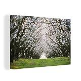 Leinwandbild - Tunnel aus den blühenden Mandelbäumen -