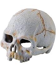 Exo Terra İnsan Kafatası (S)