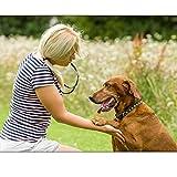 Zoom IMG-2 fretod fischietto cane e clicker