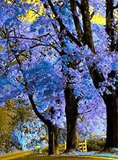 foxglove tree seeds