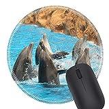 N\A 0525 Alfombrilla de ratón Redonda Alfombrilla de Goma Natural Delfines Bailando en el Agua Durante el espectáculo en Loro Parque en Tenerife España Foto