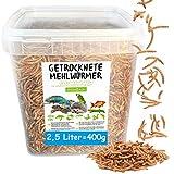 Gusanos de harina secos • 2,5 litros de alimento premium en cubo • El snack rico en proteínas para aves silvestres, peces, reptiles, tortugas y erizos.
