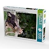 CALVENDO Puzzle Emotionale Momente: Der Wolf. 1000 Teile Lege-Größe 48 x 64 cm Foto-Puzzle Bild von Ingo Gerlach