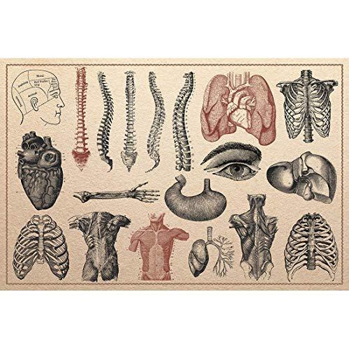 Imágenes Lienzo Anatomía Humana Esqueleto Esqueleto Esquel