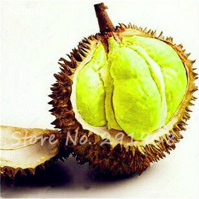 10 Pcs Durian Seeds délicieux roi de fruits sains Tropical Giant Trees Jardin Plantes Bonsaï Non-GMO Haute Nutrition 1