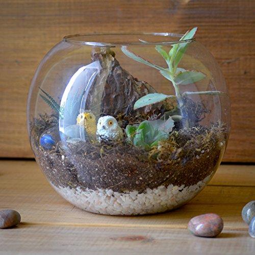 Terrarium Plants Buy Terrarium Plants Online At Best Prices In