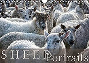 Sheep Portraits: Discover 12 Beautiful Portraits of Sheep in the Countryside (Calvendo Animals) by Martina Cross (2014-12-23)